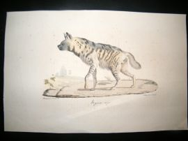 Saint Hilaire & Cuvier C1830 Folio Hand Colored Print. Hyena